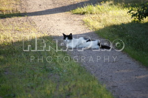 Cat Lying on the Road - Henri Pero Photography