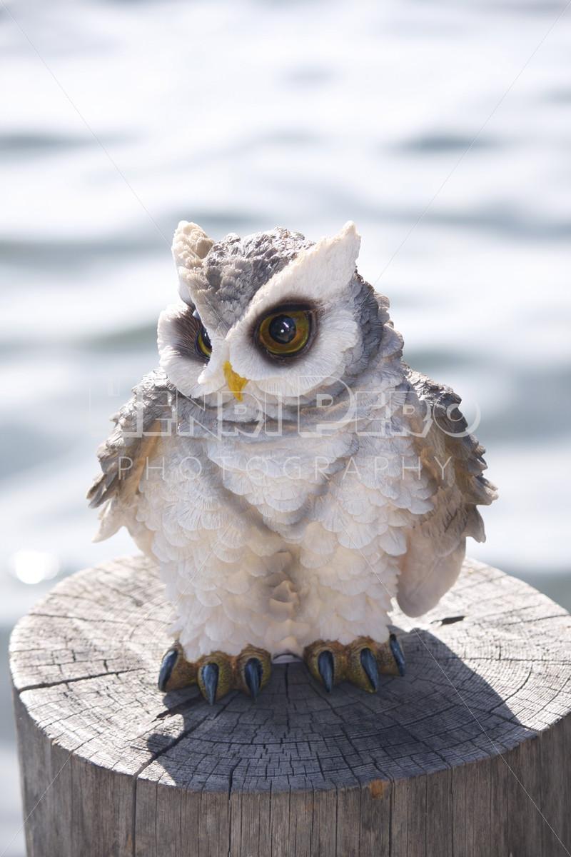 Owl - Henri Pero Photography