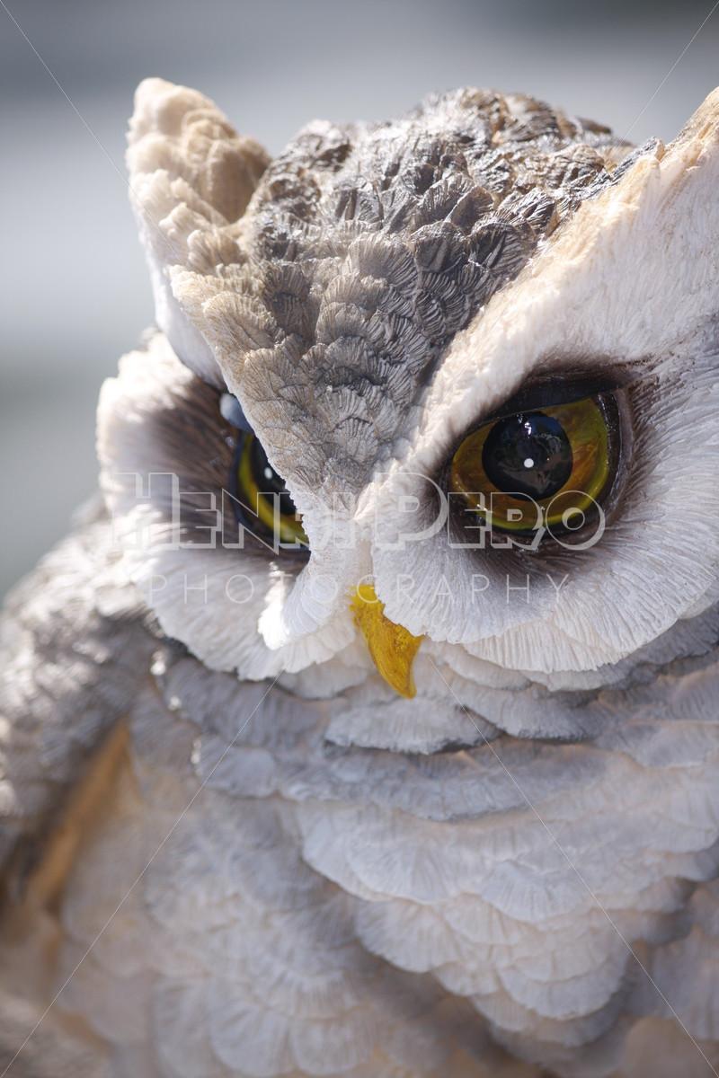 Owl's Glance - Henri Pero Photography