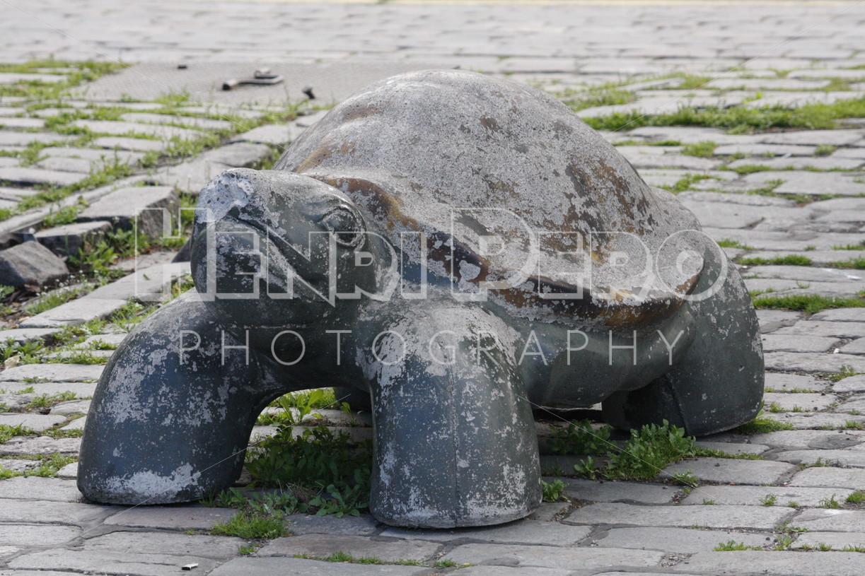 Turtle Roadblock - Henri Pero Photography