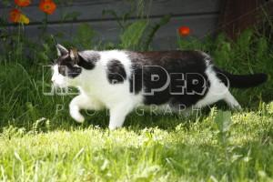 Cat in Garden - Henri Pero Photography