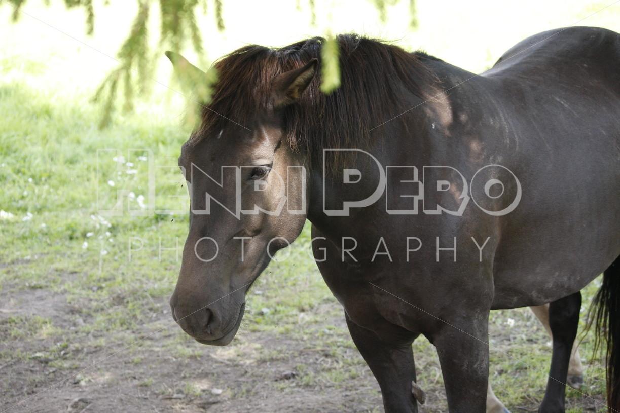 Horse - Henri Pero Photography