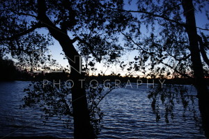 Silhouette of Trees During Sunset - Henri Pero Photography