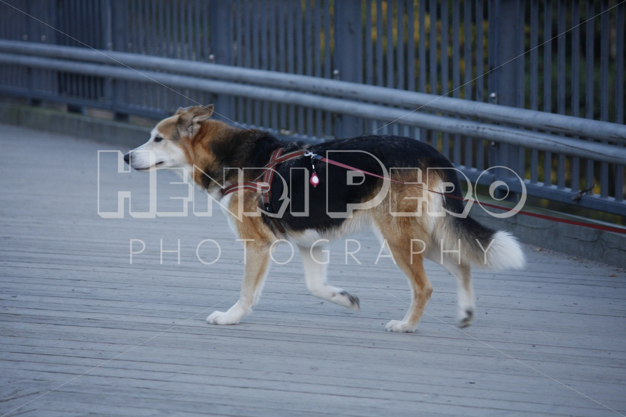 Dog Walking in the City - Henri Pero Photography