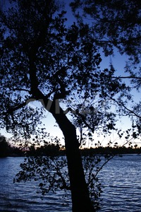 Silhouette of Tree During Sunset Stock Photo