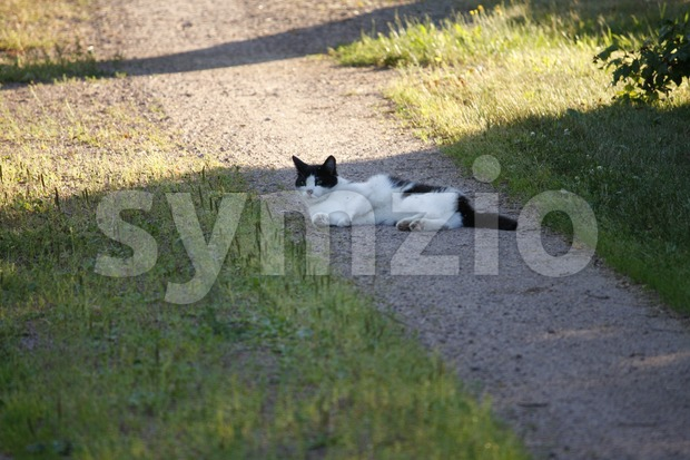 Cat Lying on the Road Stock Photo