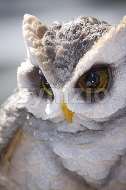 Owl's Glance Stock Photo