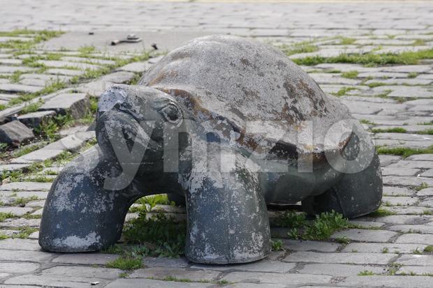Turtle Roadblock Stock Photo