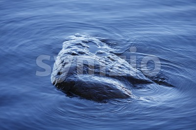 Stone in the Water Stock Photo