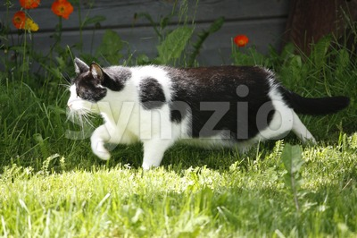 Cat in Garden Stock Photo